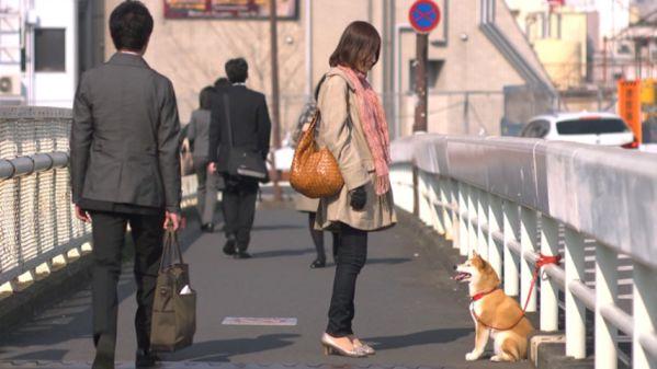 inumichi dogsway IMAGE 01